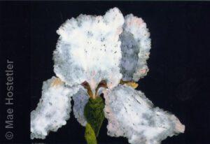 Iris 1 | Oil Monotype | Mae Hostetler