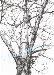Tree Study #2 | Ink | Dee Overly