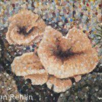 Mushrooms in Woodland | Acrylic | Jim Rehlin